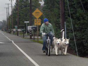 laisse pour chien velo husky et chien de traineau