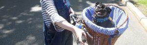 Comment faire du vélo avec son chien en sécurité