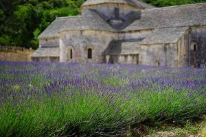 Un champ de lavande en Provence