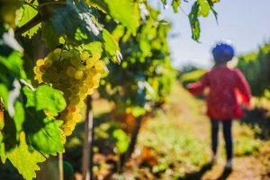 Les vignobles du Cognac sur la Flow Vélo en Nouvelle-Aquitaine