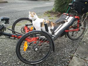 Un chat sur un tricycle couché… et pourquoi pas !