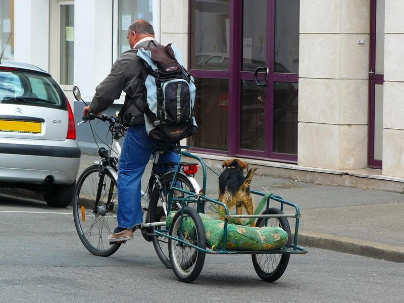 Photo insolite autour du vélo : à vélo avec son chien