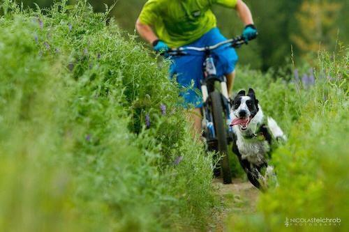 balade avec son chien à vélo