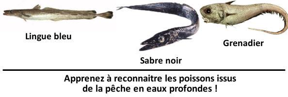 Apprenez à reconnaitre les poissons issus de la pêche en eaux profondes !