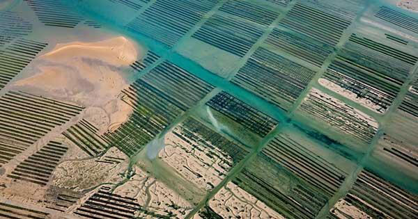 Vue aérienne des marais salant