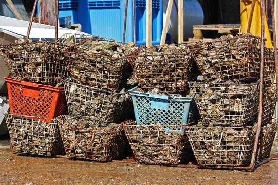 L'ostréiculture fait partie intégrante du paysage de l'île d'Oléron
