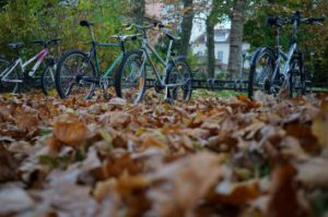 feuilles à vélo