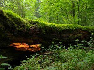 EuroVelo 2 : forêt en Bielorussie