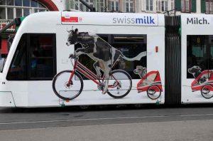 Intermodalité vélo et transports en commun : la vache cycliste
