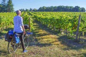 Vignes à Cognac sur la Flow Vélo®