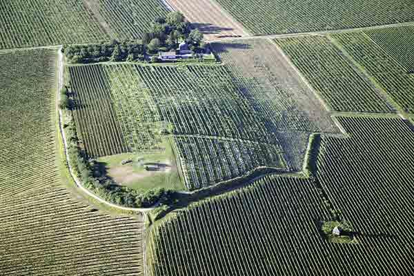 La région viticole de Villány-Siklósen en Hongrie