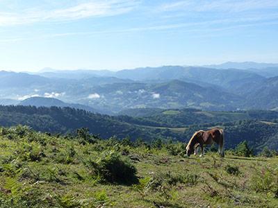 Les vallons verdoyants du Pays-Basque