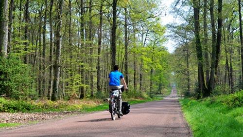 Des portions de la Vallée du Loir à vélo dans la forêt