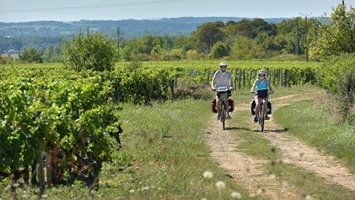 Dans les vignobles de la Vallée du Loir à vélo