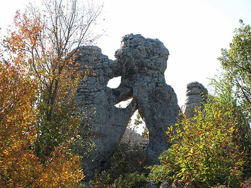 Sculptures naturelles dans le Bois de Paiolive