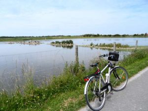Marais du Crotoy à vélo