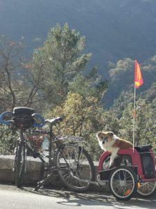 Chien dans sa remorque lors d'un voyage à vélo