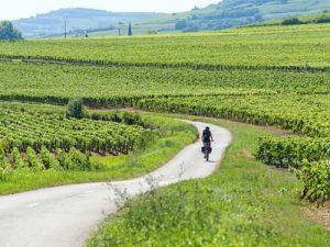 route des vins à vélo bourgogne
